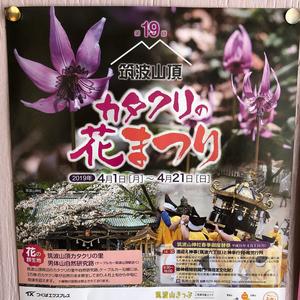 カタクリの花まつり